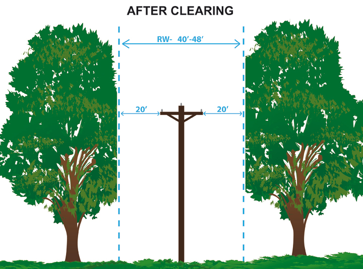 updated tree clearing